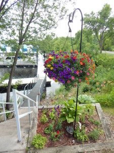 Nature St. Croix River Valley Flowers