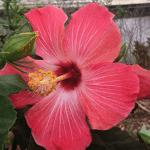 Flowers Bayport Marina St. Croix River MN