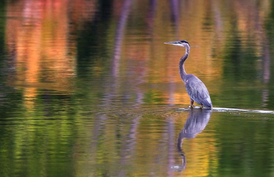Fauna St. Croix River